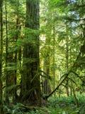 Lasowa scena Obrazy Stock