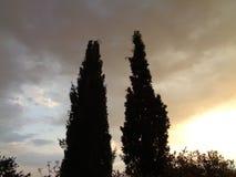 Lasowa scena droga gruntowa - gałąź bacground niebo - obrazy royalty free
