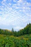 lasowa sceneria fotografia stock