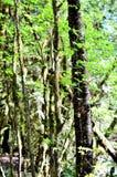 Lasowa sceneria Zdjęcia Stock