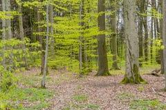 Lasowa sceneria przy wiosna czasem Fotografia Stock