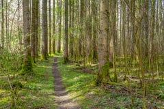 Lasowa sceneria z footpath Fotografia Stock