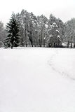 lasowa sceny śniegu drzew zima Zdjęcia Royalty Free