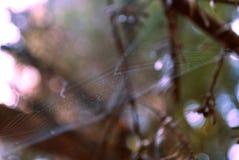 Lasowa sieć Obraz Stock