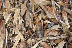 Lasowa sosny barkentyna Fotografia Royalty Free