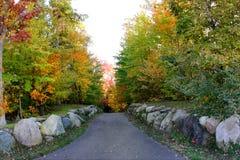 lasowa spadek ścieżka Zdjęcia Royalty Free