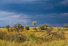 lasowa stepowa burza Obraz Stock