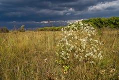 lasowa stepowa burza Obraz Royalty Free