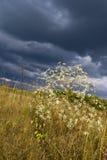 lasowa stepowa burza Zdjęcia Royalty Free