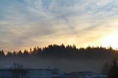 Lasowa sylwetka w ranku Obraz Stock