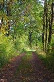 lasowa tajemnicza ścieżka Obrazy Royalty Free
