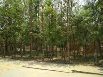 Lasowa teren scena Zdjęcia Royalty Free