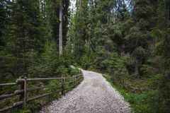 Lasowa ulica Fotografia Stock