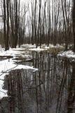 lasowa wiosna Zdjęcie Royalty Free