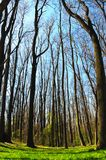 lasowa wiosna Fotografia Royalty Free