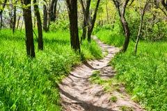 lasowa wiosna Obraz Stock