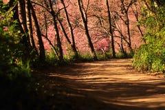 lasowa wiosna obrazy royalty free