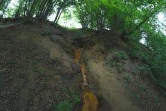 Lasowa wiosna w skale w lesie Zdjęcie Stock