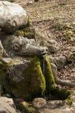 Lasowa wiosna z smok głową Obrazy Stock