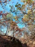 Lasowa wolność fotografia stock