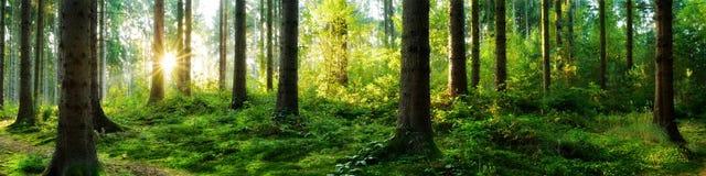 Lasowa wschód słońca panorama obrazy royalty free
