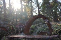Lasowa wyróbka Zdjęcia Royalty Free