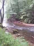 Lasowa zatoczka Zdjęcia Stock