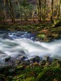 Lasowa zatoczka Fotografia Royalty Free