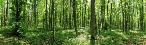 lasowa zieleń obraz stock