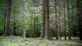 lasowa zieleń Obrazy Royalty Free