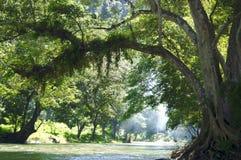lasowa zieleń Zdjęcie Royalty Free