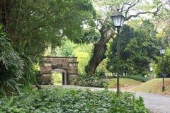 lasowa zieleń Obraz Royalty Free