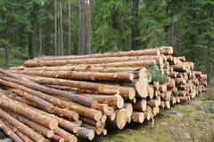 lasowa zieleń notuje sosny Obrazy Stock