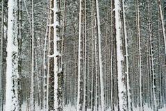 lasowa zima Fotografia Royalty Free