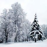 lasowa zima Zdjęcie Stock
