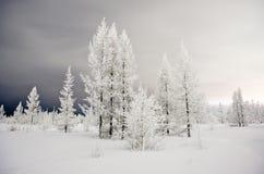 lasowa zima Obrazy Stock