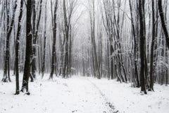 lasowa zima Zdjęcie Royalty Free
