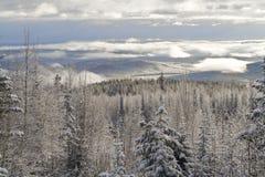 lasowa zima Fotografia Stock