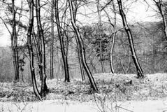 lasowa zima Zdjęcia Royalty Free