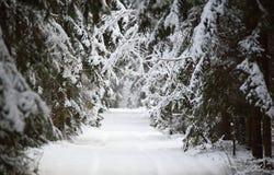 Lasowa zimy scena obraz stock