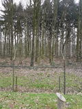 Lasowa zwierzę natura Obraz Royalty Free