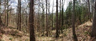 Lasowe łąki zdjęcie stock