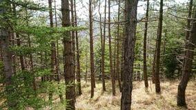 Lasowe łąki obrazy royalty free