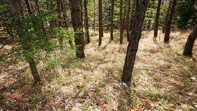 Lasowe łąki obraz stock