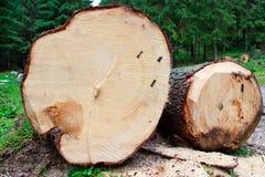 lasowe bele fotografia stock
