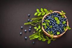 Lasowe czarne jagody zdjęcia royalty free
