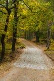 Lasowe drogi 7 Obrazy Royalty Free