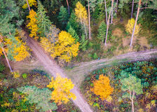 Lasowe drogi Obraz Stock