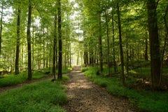 Lasowe drogi przemian Obrazy Royalty Free