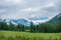 Lasowe góry w tle Zdjęcia Stock